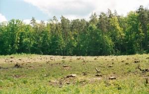 Предлагается ужесточить ответственность за осуществление незаконной рубки деревьев