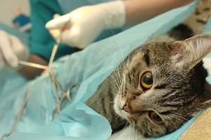 Ответственность за нарушение ветеринарного законодательства