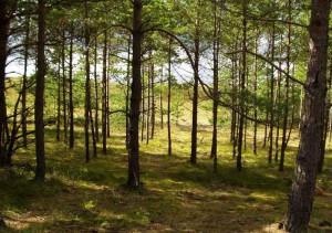 Предложено расширить правомочия лесопользователей