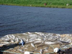 Планируется разрешить свободное рыболовство для ведения традиционного образа жизни