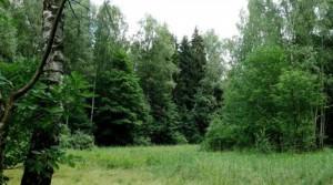 Ответственность за нарушение лесного законодательства