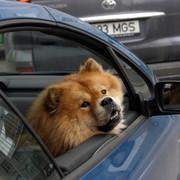 Планируют ужесточить требования к владельцам домашних животных