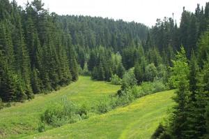 Закон РФ об охране окружающей среды